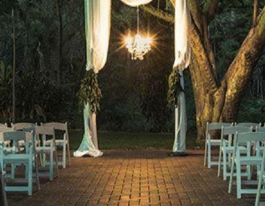 jacaranda-tree-76-p1119863-1700130528